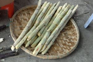 peeled sugar cane ready for chewing or for a juice