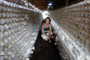 Bo` on the road in a oyster mushroom farm, Thailand