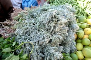 wormwood sold on the market in Morocco by Authentic World Food