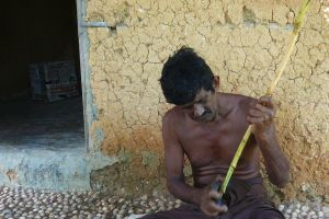 local man peeling fresh cinnamon sticks in Sri Lanka