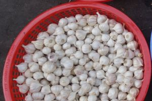 garlic sold from the basket on local market in Vietnam