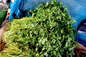 Bunch of green parsley in a traditional Moroccan market suk