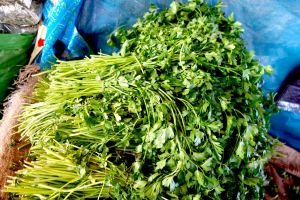 Bunches of green parsley sold on the market in Morocco