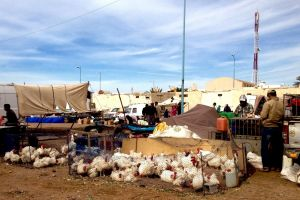 Chicken sold on traditional Moroccan market, souk - by Authentic World Food