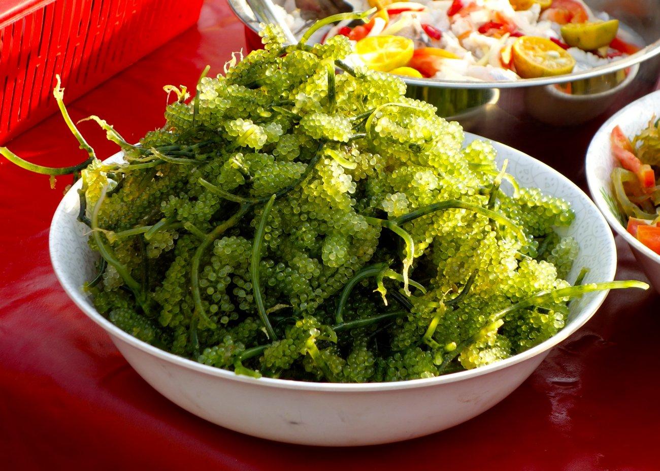latok seaweed